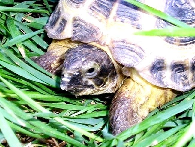 як перевезти морську черепаху в поїзді