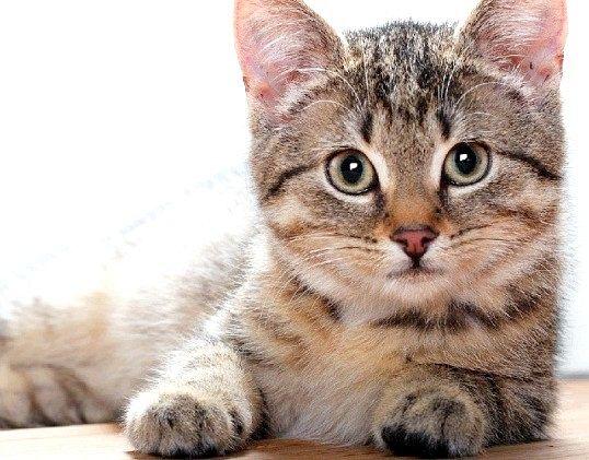 Що люблять кішки