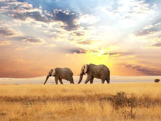 Що означає фраза «роздача слонів»
