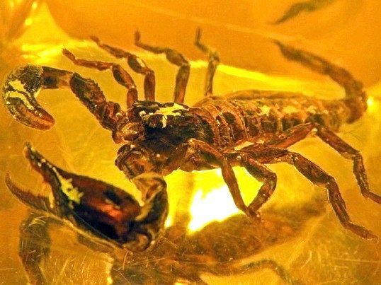 Що подарувати скорпіонові