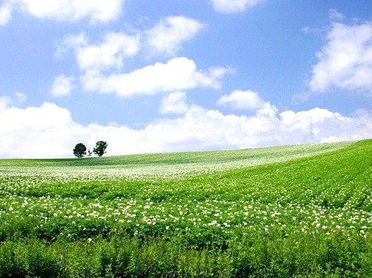Що таке Спільна часткова власність на земельну ділянку