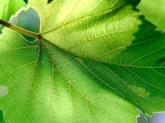 Що таке рослинна тканина