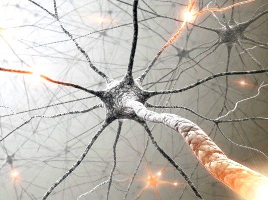 Що таке вегетативна нервова система
