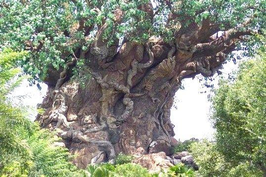 Що таке залізне дерево