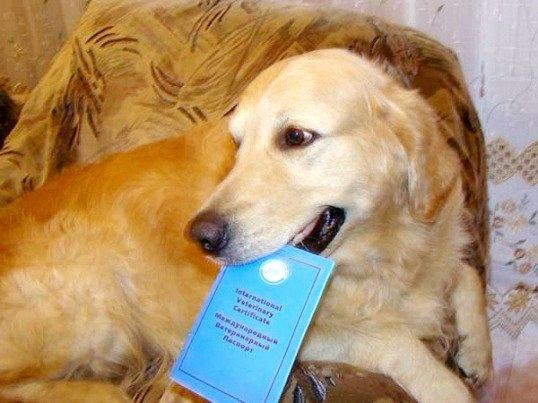 щеплення треба робити собаці щорічно