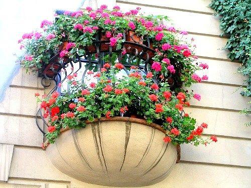 Домашній квітник