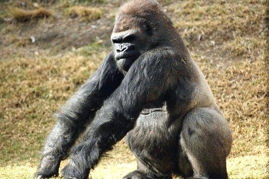 є мавпи