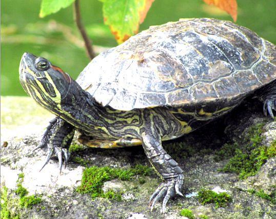 як зробити тераріум для черепахи своїми руками