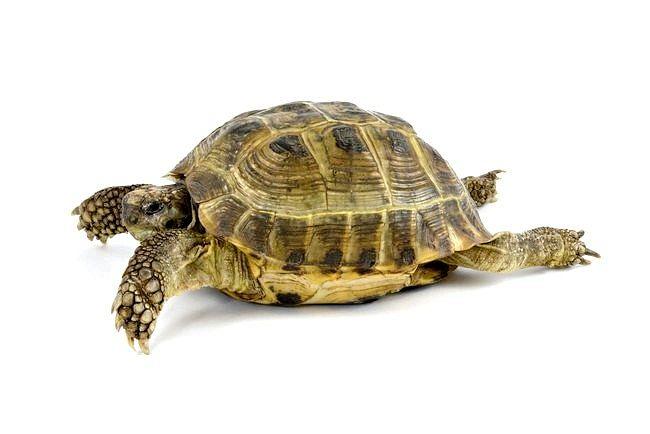 як зробити будиночок для сухопутної черепахи своїми руками