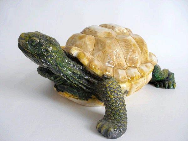 як дізнатися стать сухопутної черепахи