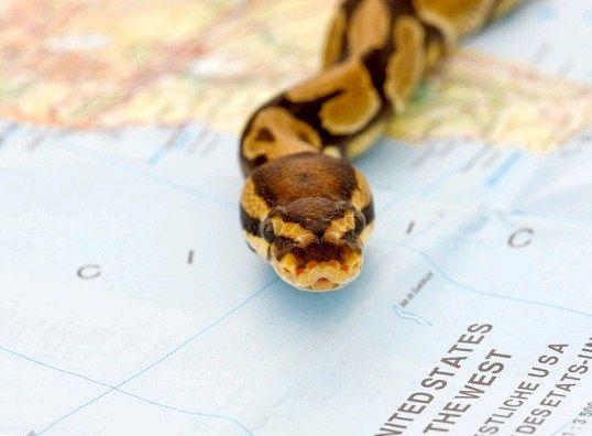 Як бути, якщо вкусила змія