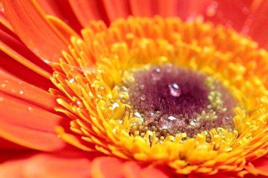 Як діє на людину помаранчевий колір