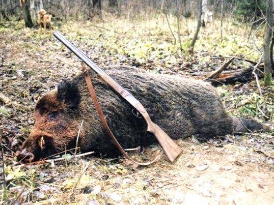 Як називається мисливець без ліцензії, що порушує закон
