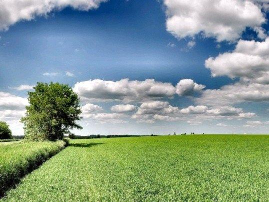 Як Оформити непріватізовану землю у власність