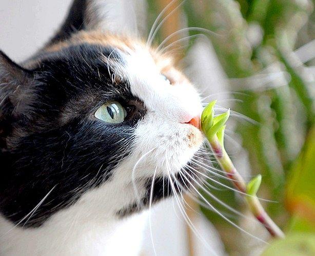 як відвадити кішок з грядок