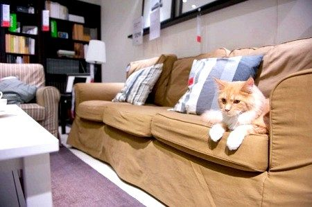 Як підготувати кішку до переїзду