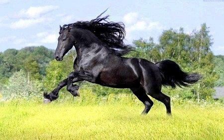Як помити коня