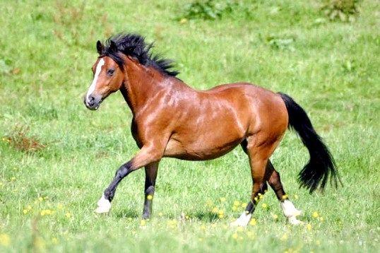 Як заспокоїти коня
