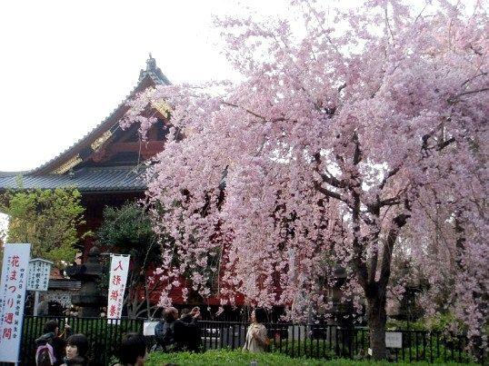 Японці розуміють щастя в спогляданні природи, набутті спокою
