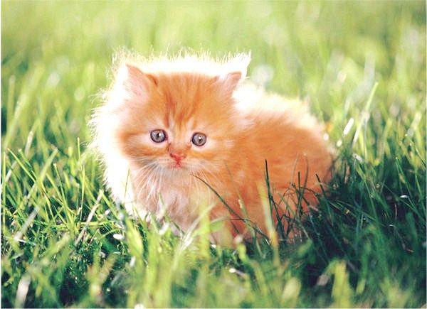 що зробити для того щоб кішка відгукувалася на свою кличку