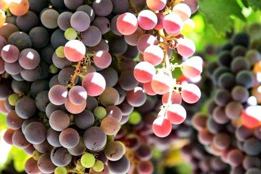 Як приготувати гаряче вино від застуди