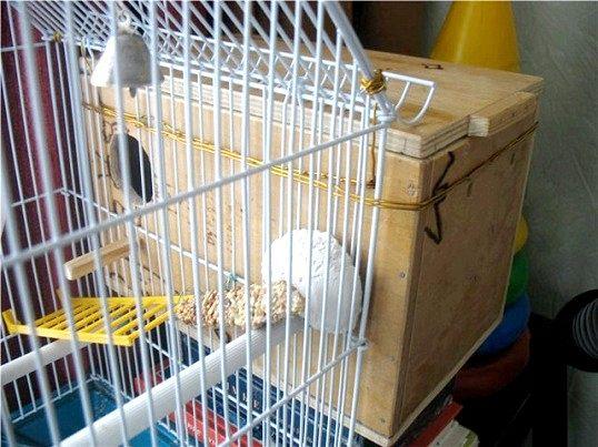 Як зробити гніздо для хвилястих папуг