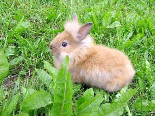 Як утримувати кроликів на дачі
