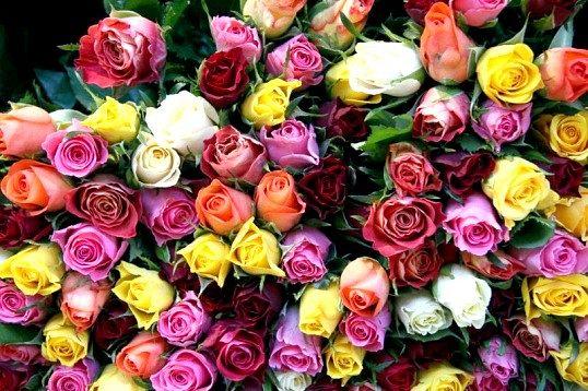 Як стати флористом