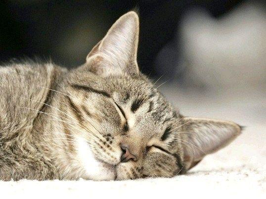 Як трактувати сни про котів
