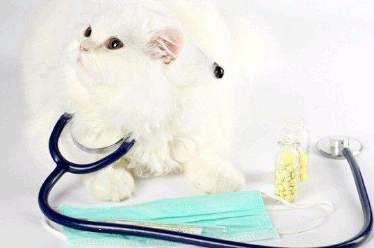 Як проводять стерилізацію кішки
