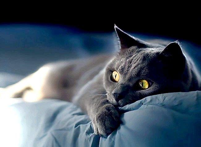 Що робити, якщо захворіла кішка