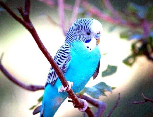 Як повернути відлетів папуги