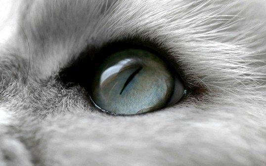 Як бачить кішка навколишній світ
