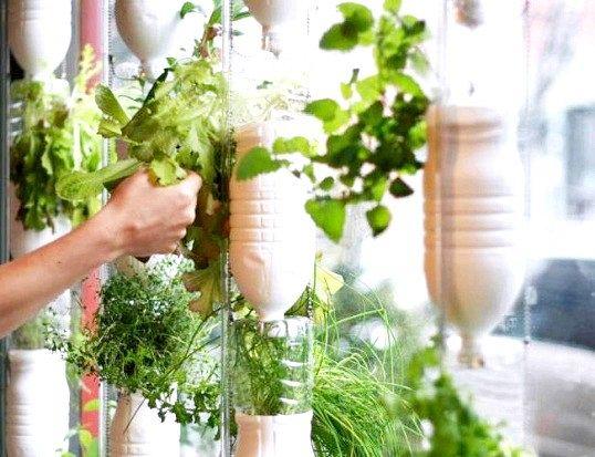Як виростити подарунковий сад
