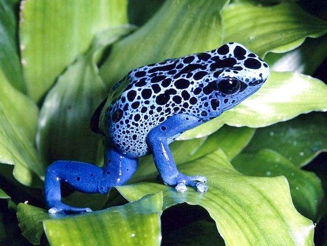 Як зимують жаби