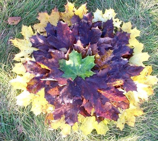 Які аплікації можна зробити з осіннього листя