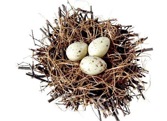 Які яйця краще всього їсти