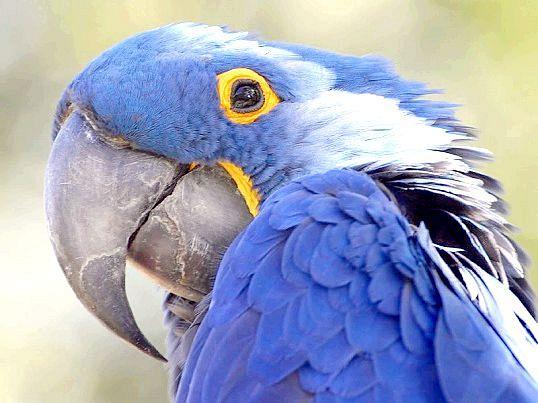 Які кімнатні рослини небезпечні для папуги