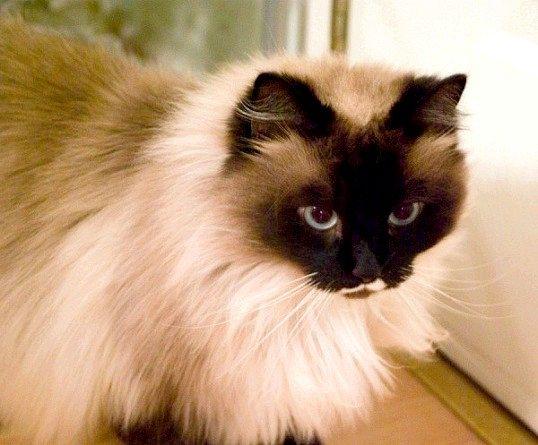 Які коти і кішки самі ласкаві