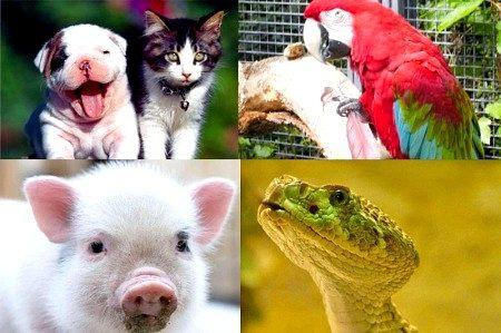 Які домашні тварини найпопулярніші