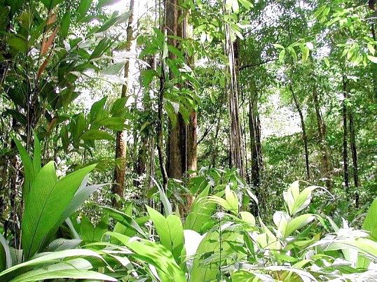 Які тварини водяться у вологих екваторіальних лісах
