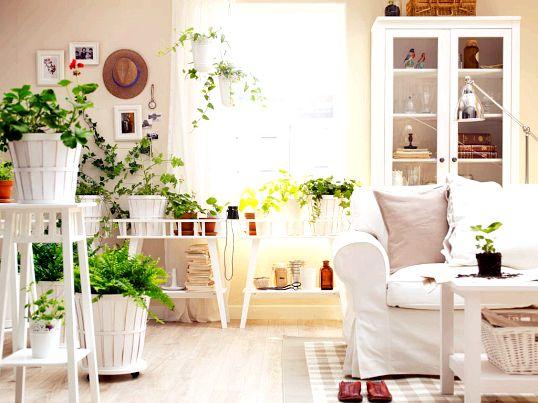 Якими рослинами можна декорувати квартиру