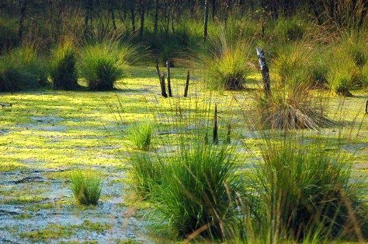 Яке болото найбільше у світі і як воно виглядає