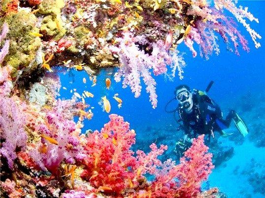 Яке море омиває Єгипет