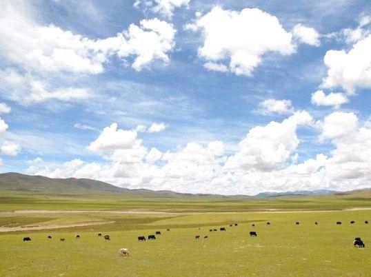 Яке плоскогір'я найбільше на землі