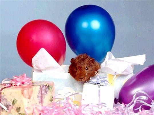 Яка тварина подарувати на день народження