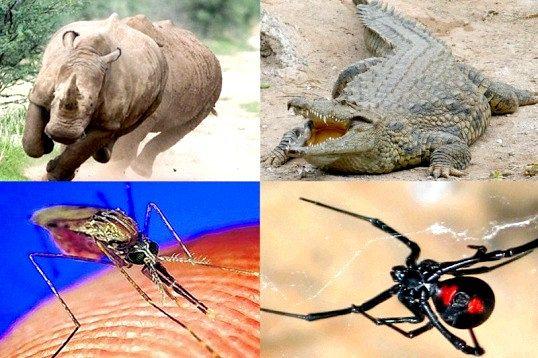 Яка тварина найнебезпечніше для людини