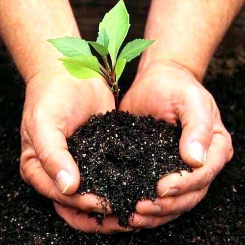 Коли садити плодові дерева