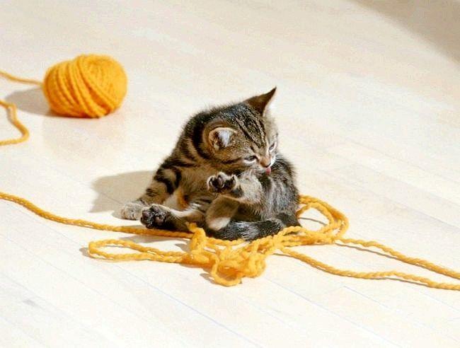як промивати око кошеняті ромашкою
