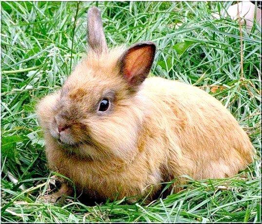 Годування кроликів